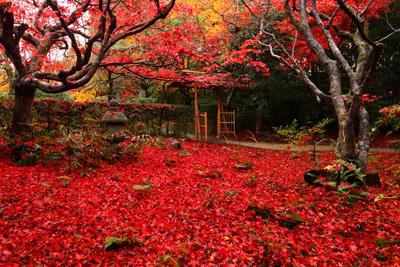 京都の穴場!真っ赤に染まる紅葉...